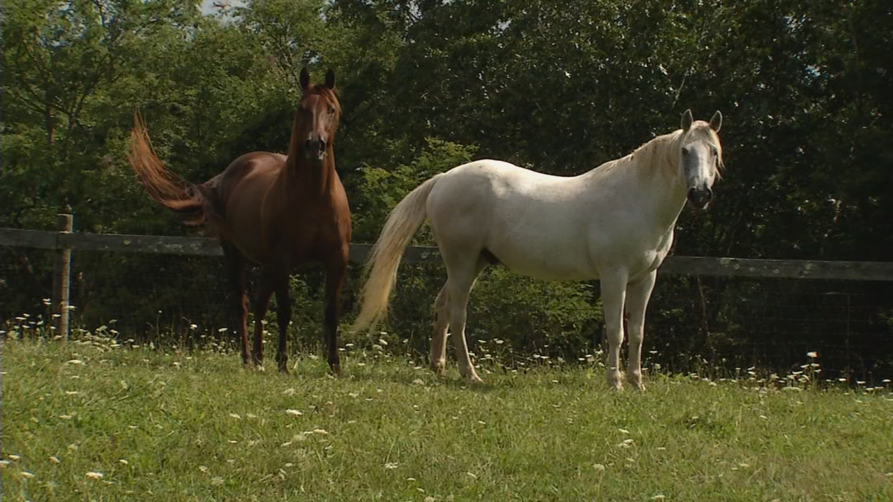 Shalimar Farm caters to horse owners, but anyone can stay. (WCHS/WVAH)