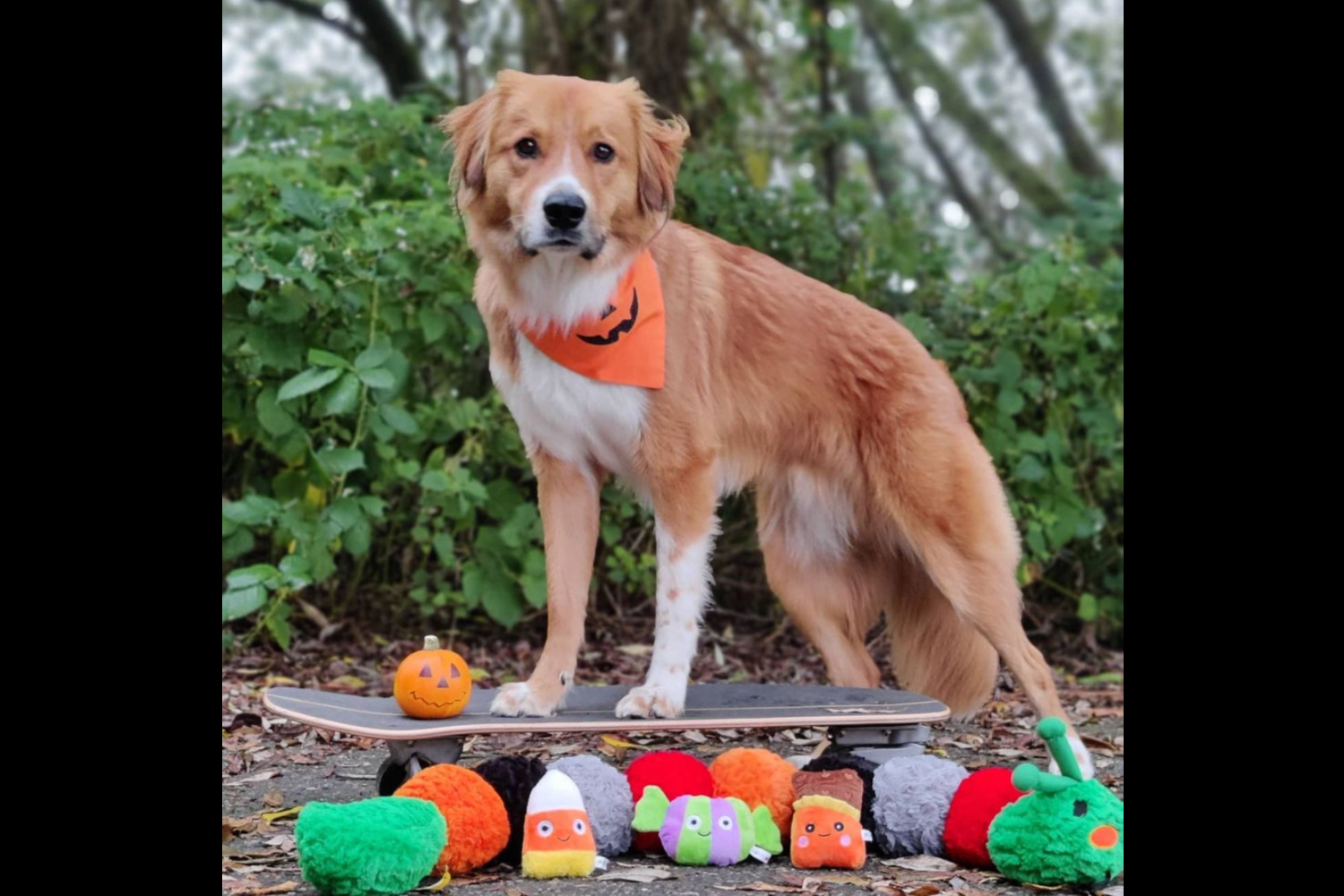 Darrel the Doge with stuffies (Image: Hailey Adair)