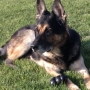 Retired Pasco police K9 officer passes away