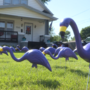 Council Bluffs organization 'flocks' homes for Alzheimer's research