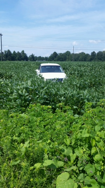 A car wrecked in a soybean field on Millers Church Road near Mullins following a police chase. (Viewer submitted photo)