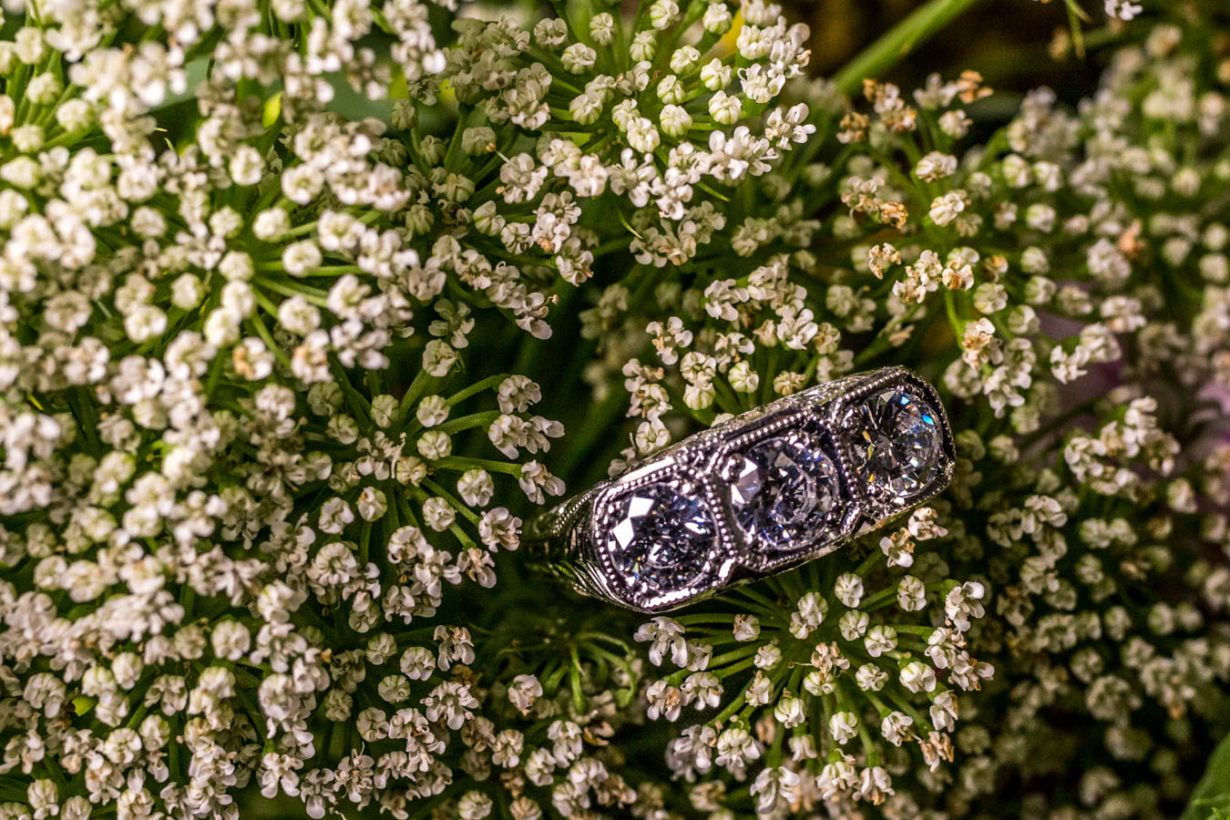 Simonetta Ring / Image: Catherine Viox{ }// Published: 10.8.19