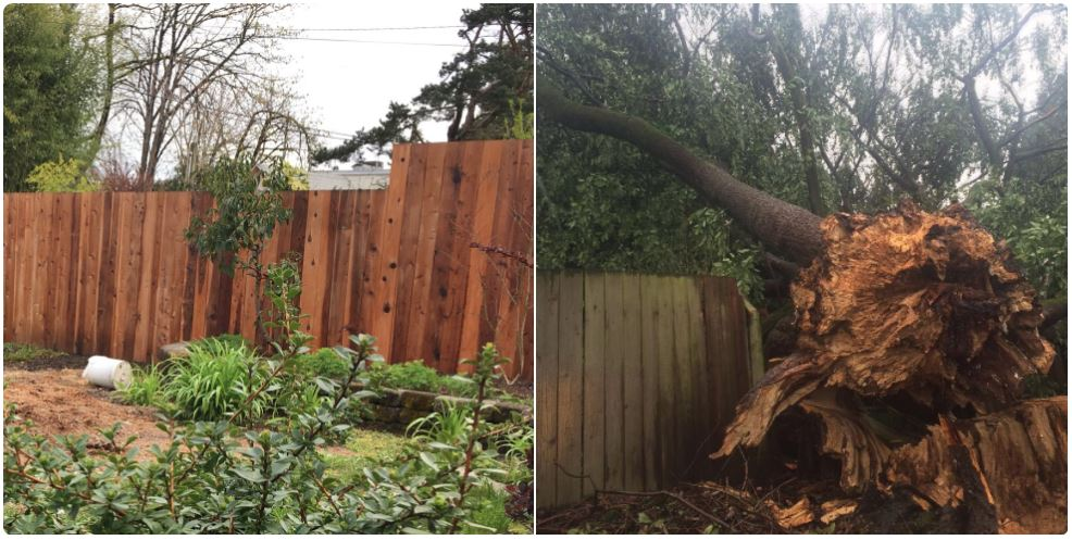 "NOW & THEN: A year ago Saturday, a massive tree made a mess of Norman Lent's yard. Lent said he has been clearing trees away from his house ever since. ""I look at trees differently now,"" Lent said. ""I enjoy seeing them from a distance but I sure don't want them around my house."" (SBG)"