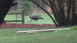 Turkey sightings lead to police request