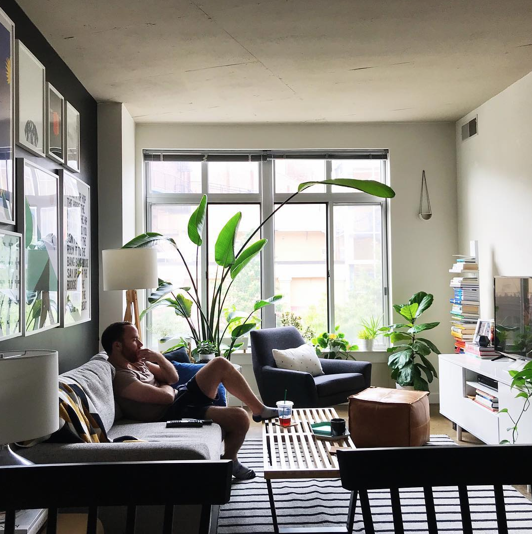 Columbia Heights is also home to some gorgeous interiors - we especially love this big plant. (Image via @billyandrews)