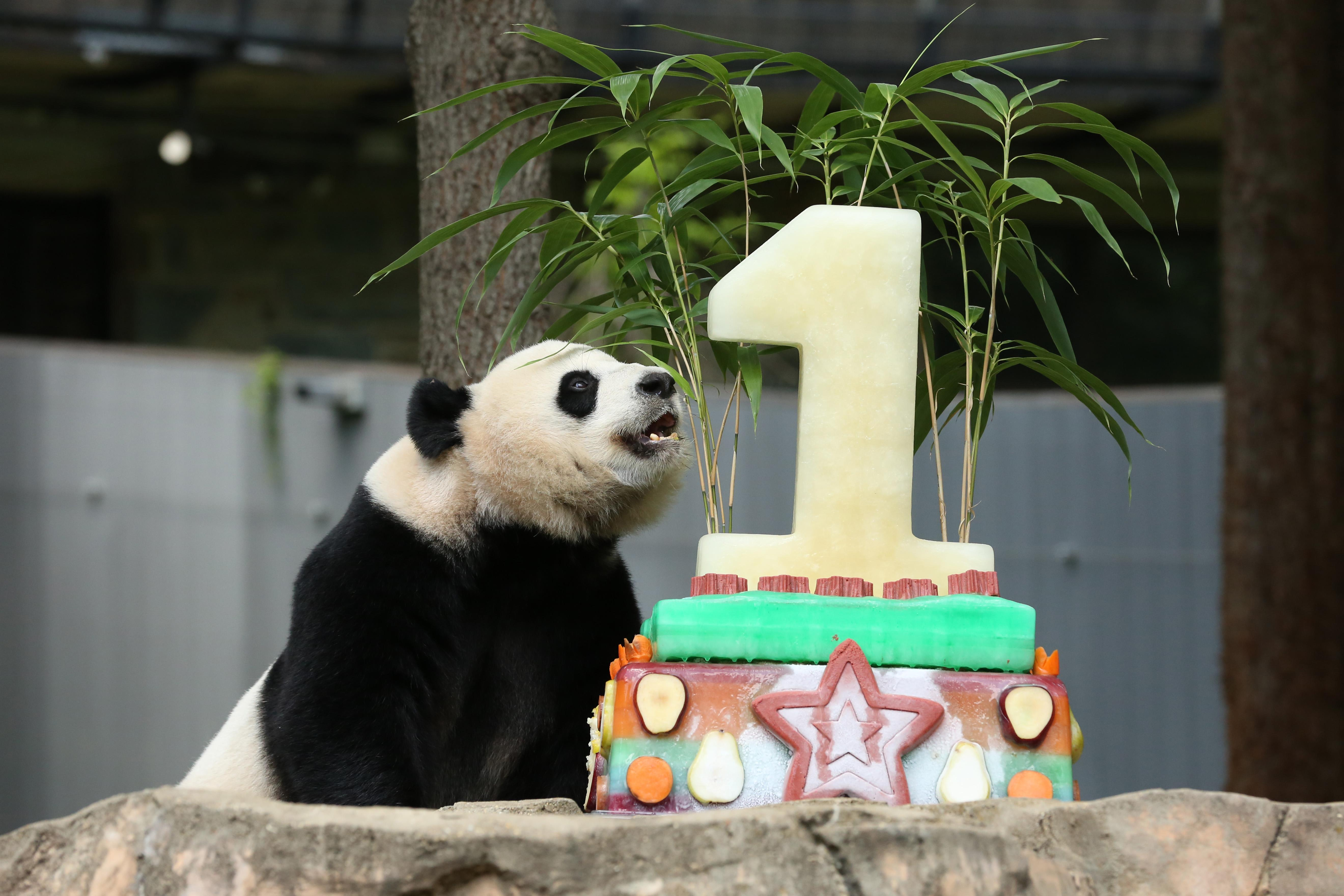 Bei Bei's first birthday, August 2016. (Amanda Andrade-Rhoades/DC Refined)