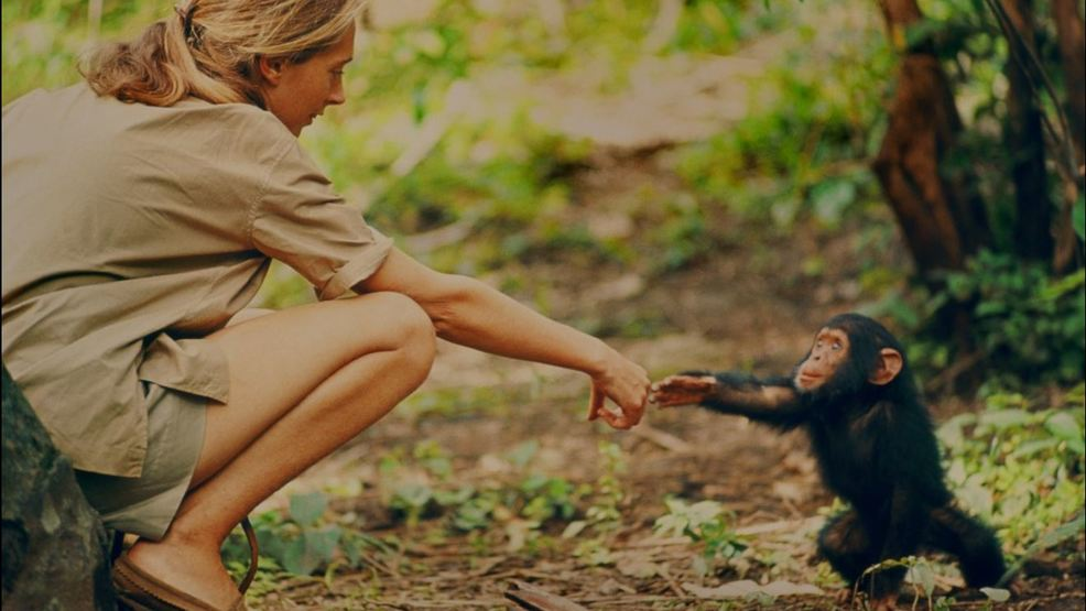 "New Documentary ""Jane"" Explores Chimp Researcher's Early Years"