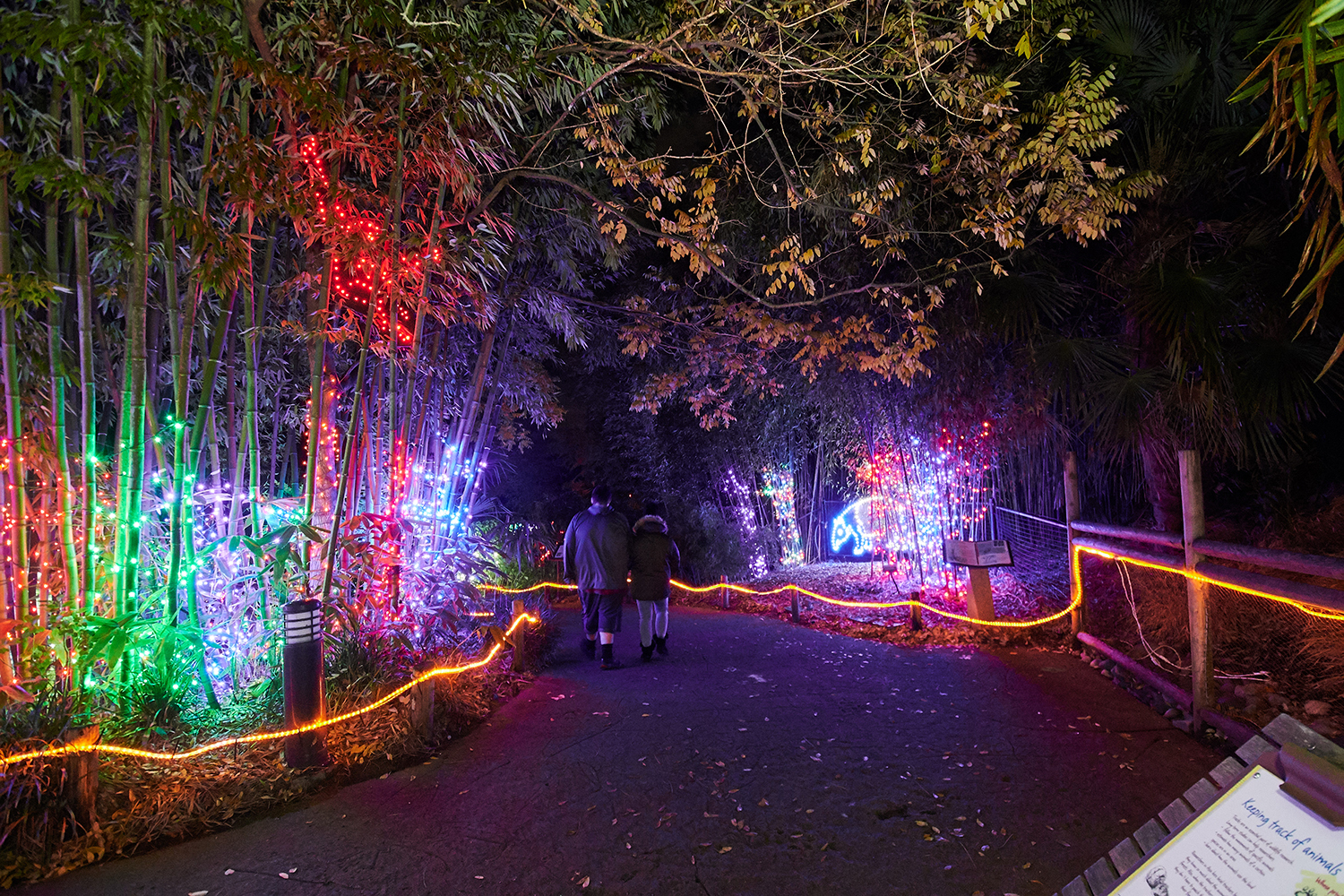 "While many holiday events are canceled this year, some still remain! One of them is ZooLights at Point Defiance Zoo & Aquarium in Tacoma, open nightly from 5-9 p.m. (last entry is at 8 p.m.) through January 3, 2021. Ticket are limited, but if you're able to nab one you'll see over 700,000 lights strung up throughout the property, which has been transformed into a colorful winter wonderland with 3D animal light displays like a baby tapir, giant tiger face, tunnel of lights and even a Seahawks tree! Tickets are $10-$14 and can be purchased{&nbsp;}<a  href=""https://www.pdza.org/event/zoolights/"" target=""_blank"" title=""https://www.pdza.org/event/zoolights/"">online</a>. (Image: Tash Haynes / Seattle Refined){&nbsp;}"