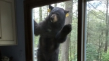 Hello there, bear: Conn. family has unexpected guest
