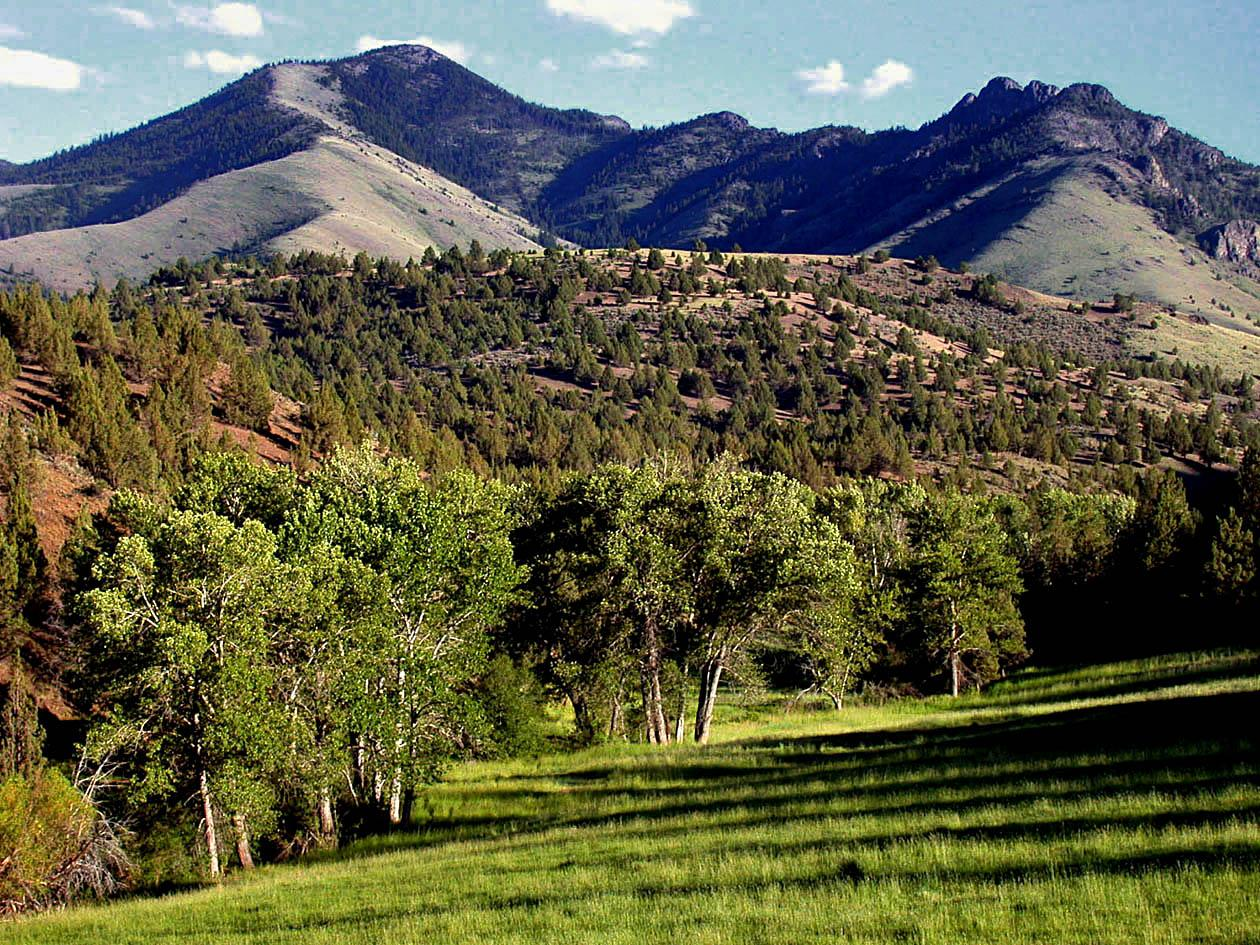 The Aldrich Mountains on the Malheur National Forest (USDA Forest Service)
