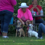 Owners remember cherished pets stricken with cancer