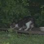 Geneseo looks for ways to manage feral cat population