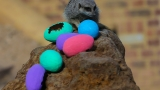 PHOTOS: Meerkats hunt for Easter eggs at ZSL London Zoo