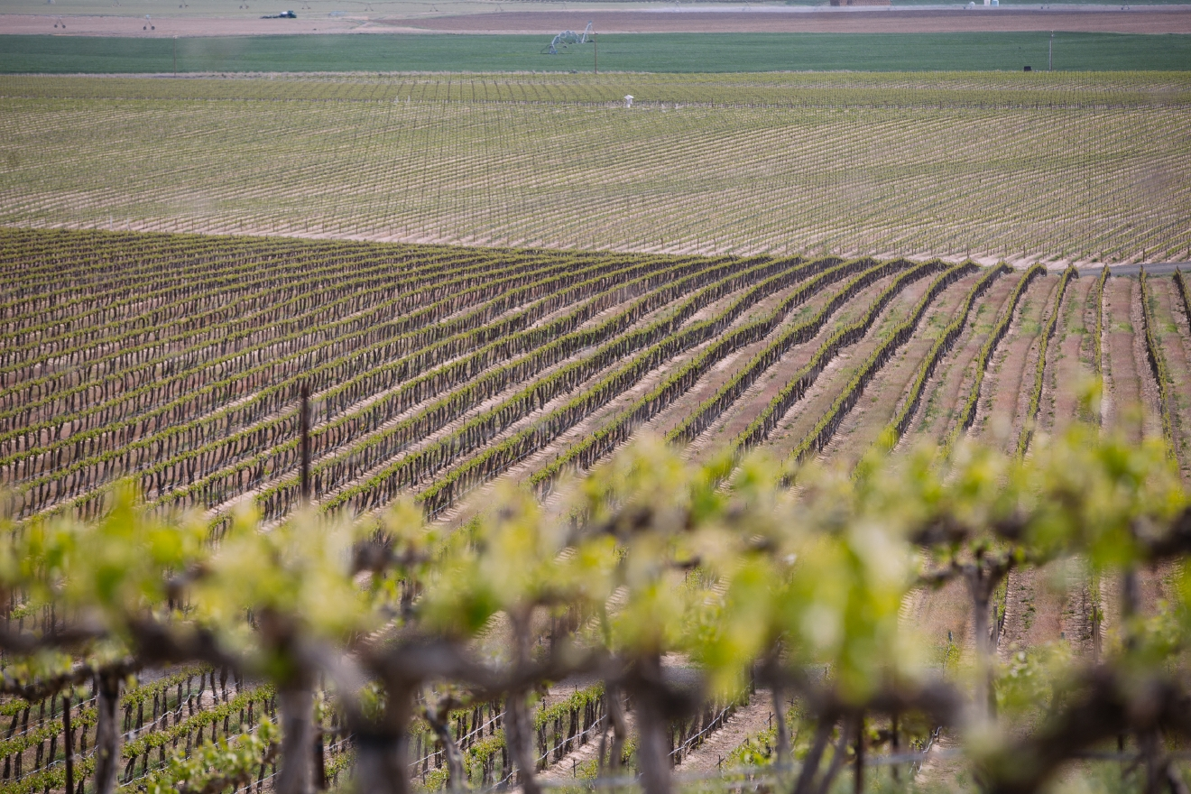 One vineyard, and 23 years. That's how the Andrews family answers when asked why Coyote Canyon Vineyard from Prosser, WA is so special. The Andrews have spent every vintage learning from the past vintages, and years gleaning ideas from other wineries to incorporate into their own farming techniques. The results are optimal yields, high-quality harvests and award-winning wines. (Image: Joshua Lewis / Seattle Refined)