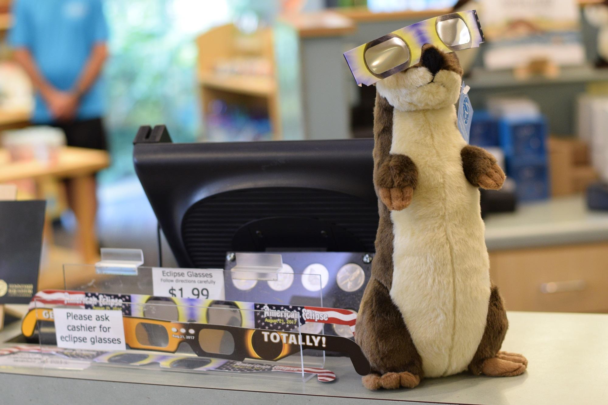 Eclipse glasses are available at the aquarium's gift shop prior to the astronomical event on August 21. (Image: Tennessee Aquarium)