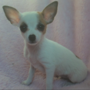 Puppy stolen from a South Sioux City pet shop