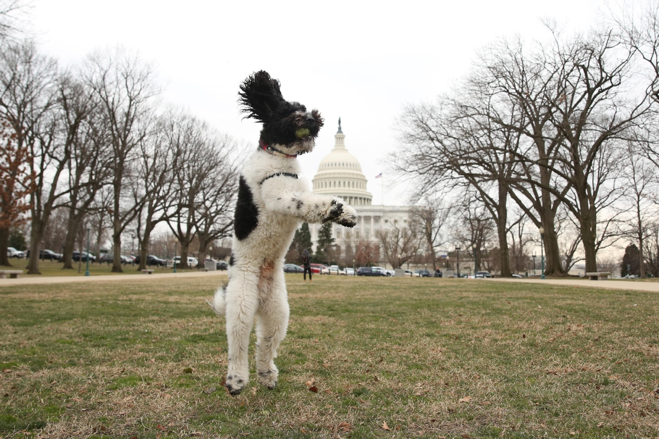 It is no secret that here at DC Refined we LOVE animals! From friendly kangaroos to baby goats doing yoga, a plethora of penguins, Goldendoodles, French Bulldogs, corgis, corgis and more corgis, the adorable animals were definitely the highlight of 2017. (Image: Amanda Andrade-Rhoades/ DC Refined)