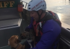 Divers rescue dogs - Cowlitz County Sheriff's Office photo.jpg