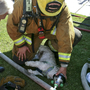 California firefighters bring nearly dead dog back to life
