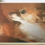 Chihuahua missing after reported coyote attack