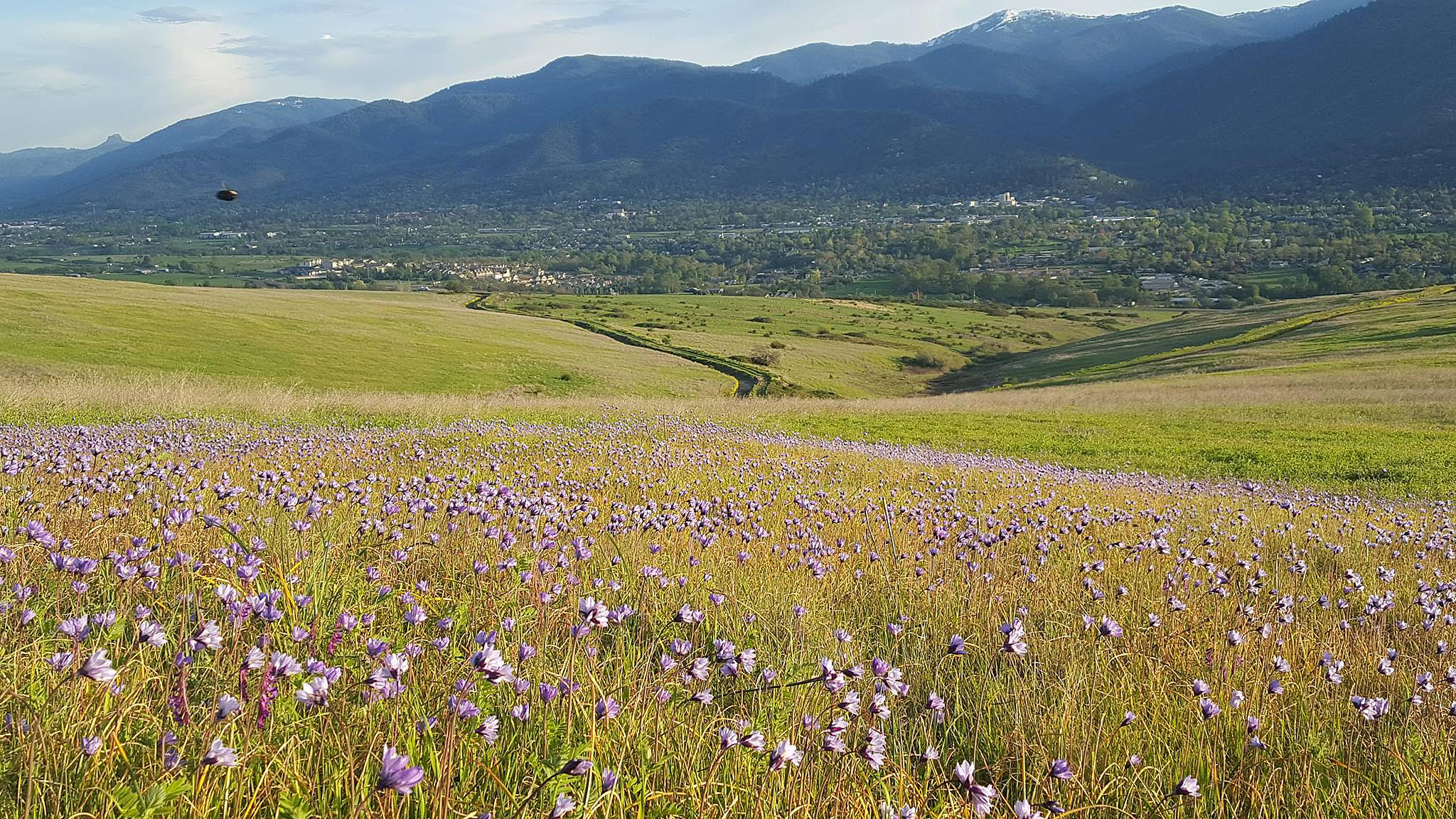 Photo courtesy of Souther Oregon Land ConservancyWildflowers bloom in the spring on the Imperatrice property across from Ashland. Additional photos appear on A5.