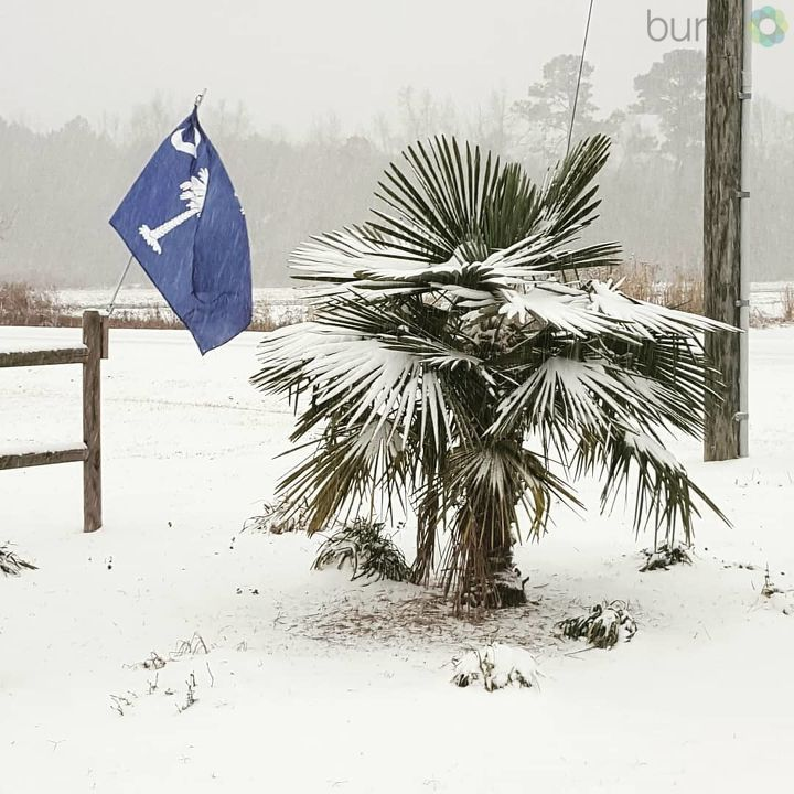 Turbeville snow (Submitted by Amanda Rabon)