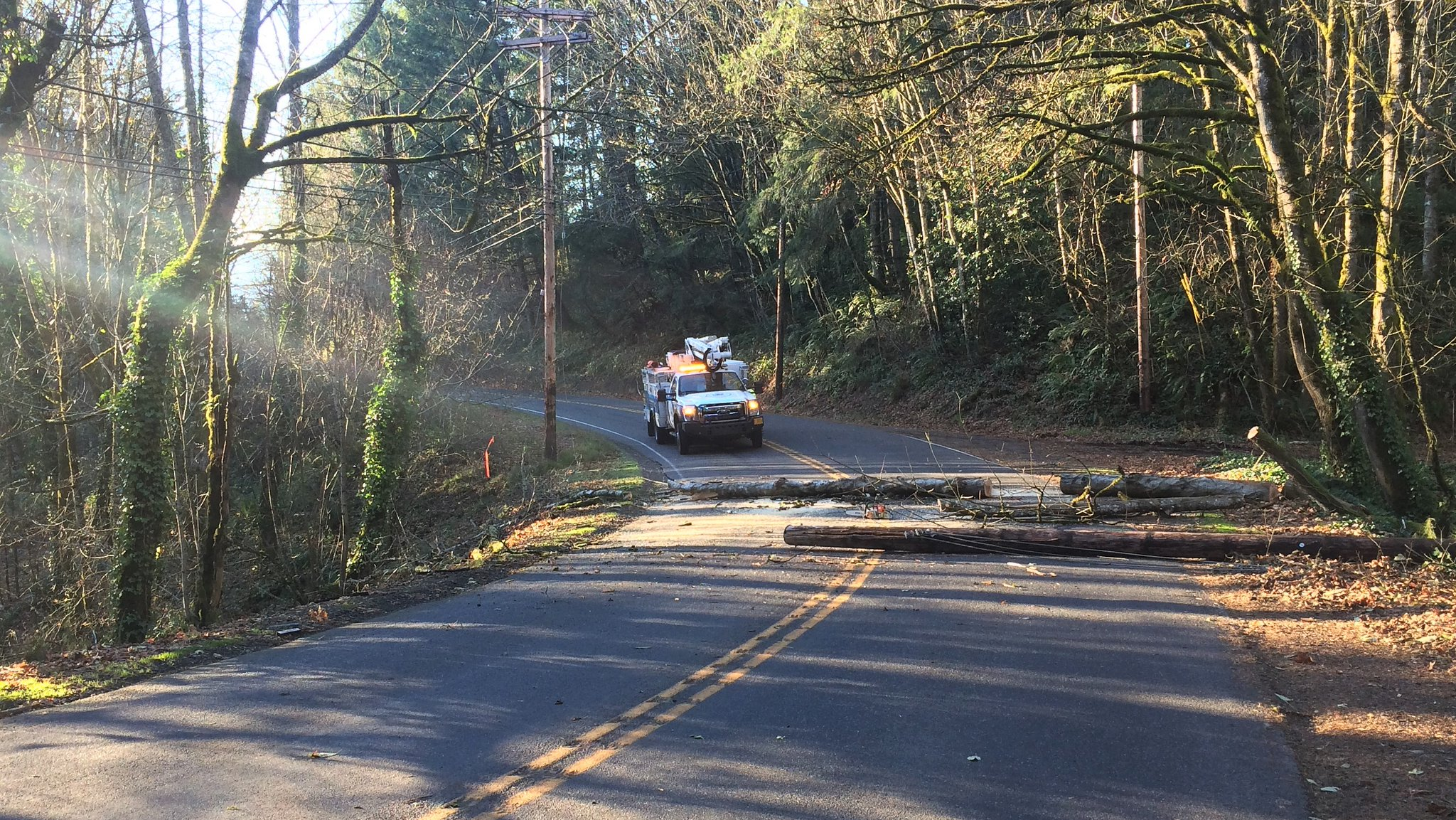 Downed tree on Germantown Road - Multnomah County Sheriff's Office photo<p></p>