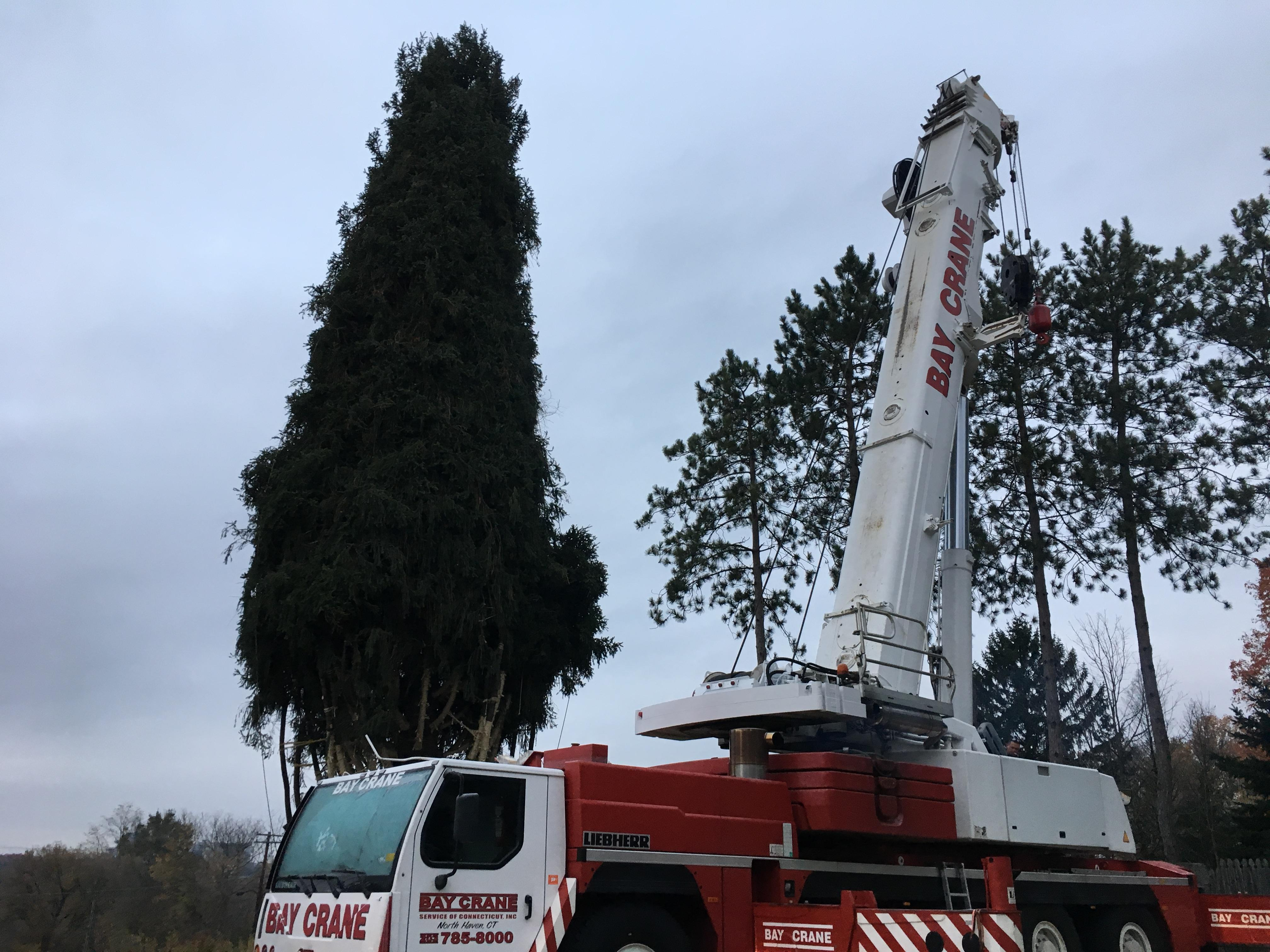Workers on Thursday will cut down a 75-foot Norway Spruce at the State College home of Jason Perrin that was chosen as the 2017 Rockefeller Center Christmas tree. (WJAC)