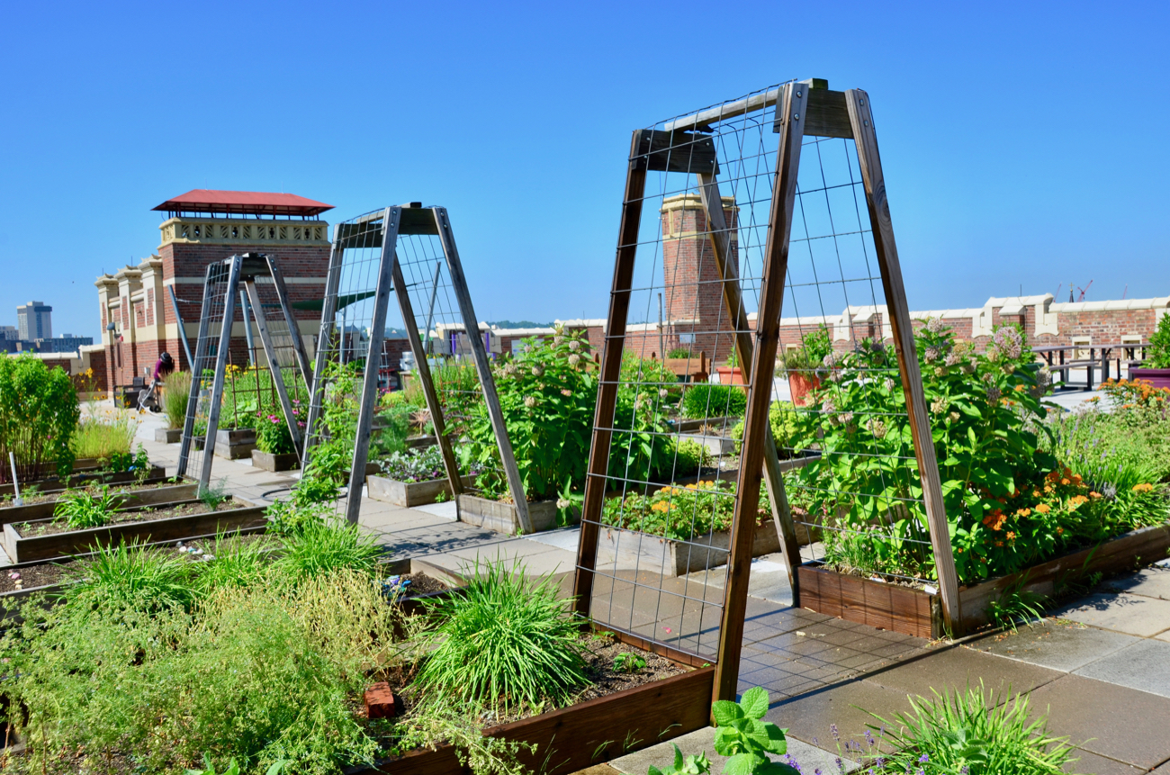 The Rothenberg Rooftop Garden is located atop the Rothenberg Preparatory Academy. Curriculum is built into an outdoor classroom setting for the students who attend the K-6 Cincinnati Public School. The garden first opened during the 2014-15 school year. Bryna Bass is the manager of the outdoor education program. ADDRESS: 241 E Clifton Ave (45202) / Image: Leah Zipperstein // Published: 9.15.20