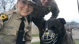 Yadi the police K9 doing well following surgery