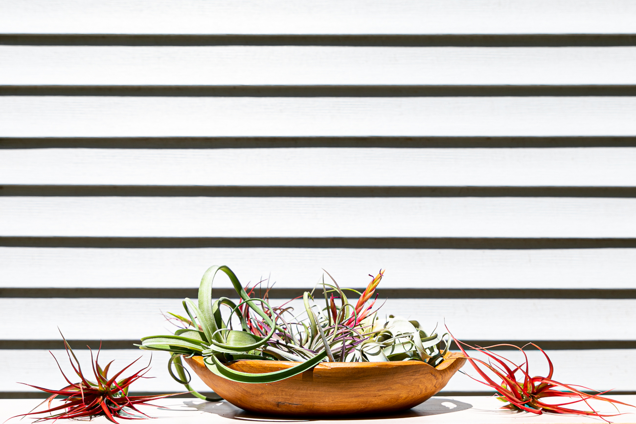 Air plants and all other items rotate in availability. / Image: Amy Elisabeth Spasoff // Published: 7.5.20