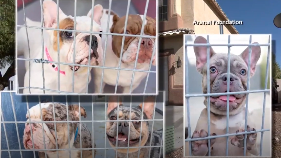 All but 16 dogs rescued from house fire returned to owners