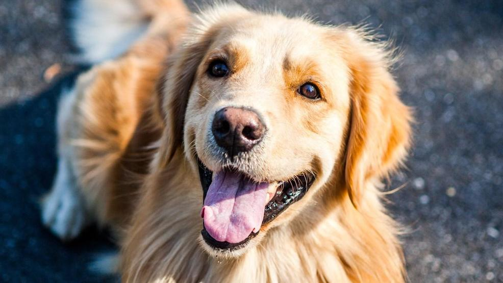 Texas law allowing dogs to dine in certain restaurants takes