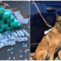 NHP, K9 confiscate numerous pounds of cocaine and meth