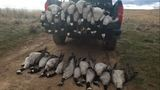 Dozens of geese, duck found dumped southwest of Kuna