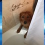 Bath-loathing Rochester dog goes viral on Twitter