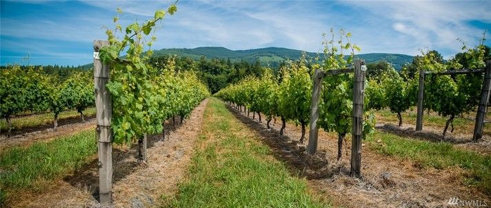 Who hasn't had a dream of leaving the big city, and starting up a winery? Well here is your chance - and you can even skip a lot of the hard parts. Eagle Haven Winery in Sedro-Woolley is being sold by Windermere's Becky Elde for $1.1 million dollars. The winery was built in 1936 and sits on 41.25 acres (not too shabby),  and is complete with an old world wine tasting room, pavilion for concerts and weddings, and over 40 acres planted in grapes. Essentially, it's a turn-key winery just waiting for you (oh, and a retail shop, wine making room, and commercial kitchen). More info at http://bit.ly/2c4qmLO. (Image: Windermere / Becky Elde)