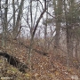 Camera shows animal not seen in Iowa for 150 years