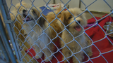 SPCA seeking info on former owners who abandoned 4 dogs in Cortland Co.