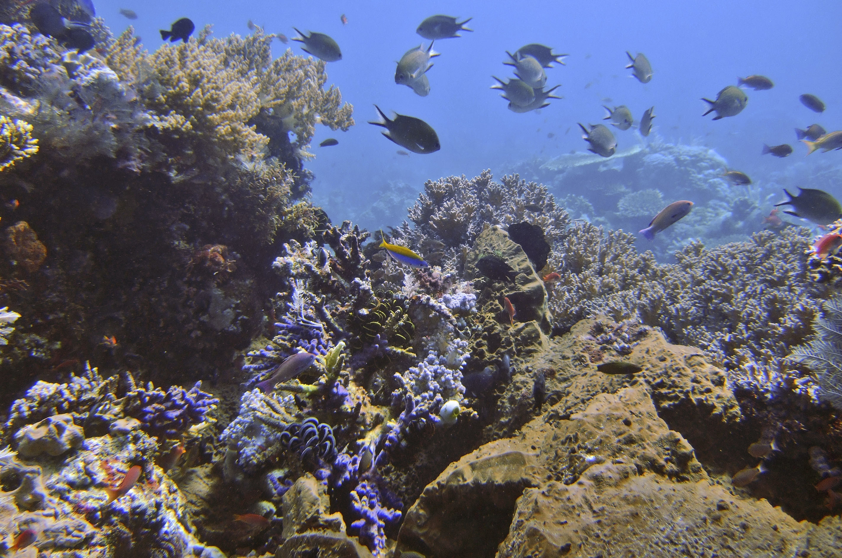 FILE - In this April 30, 2009 file photo fishes swim near coral reefs in Komodo waters, Indonesia. The COP 23 Fiji UN Climate Change Conference in Bonn, Germany, is scheduled to end Friday, Nov. 17 and aims at producing draft rules for implementing the Paris accord. (AP Photo/Dita Alangkara, file)