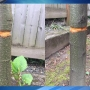 Portland man's memorial trees vandalized: 'Cut through the bark ... so they would die'