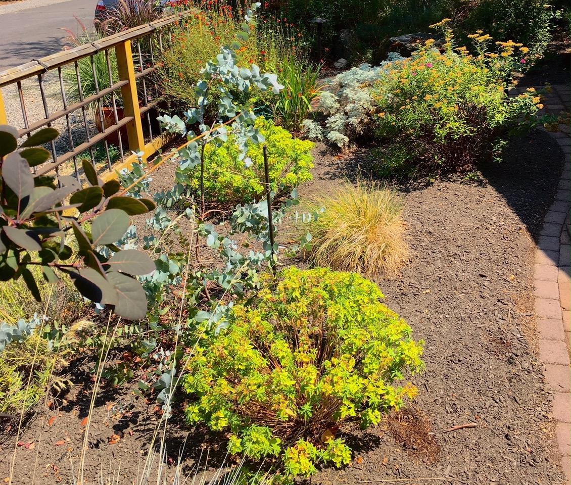 Photo by Larry Rosengren<br>The garden at 204 Alicia Ave. is the Ashland Garden Club's September Garden of the Month.