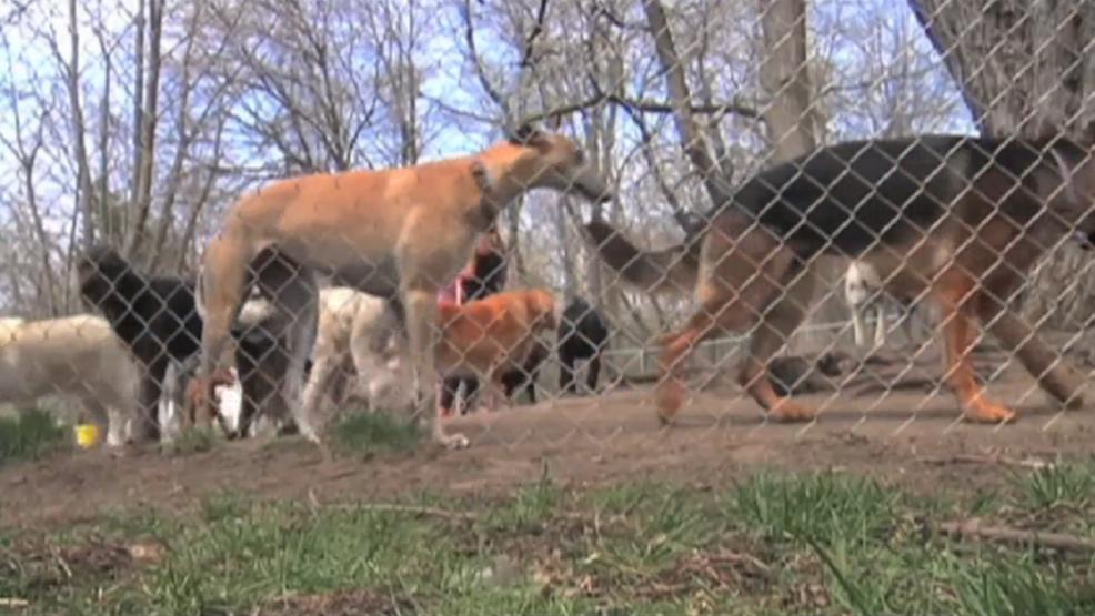 Kalamazoo lawmaker working on bill to start 'dangerous dog