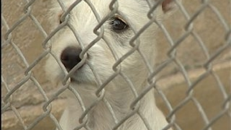 Would A No Kill Animal Shelter Work In Amarillo Kvii