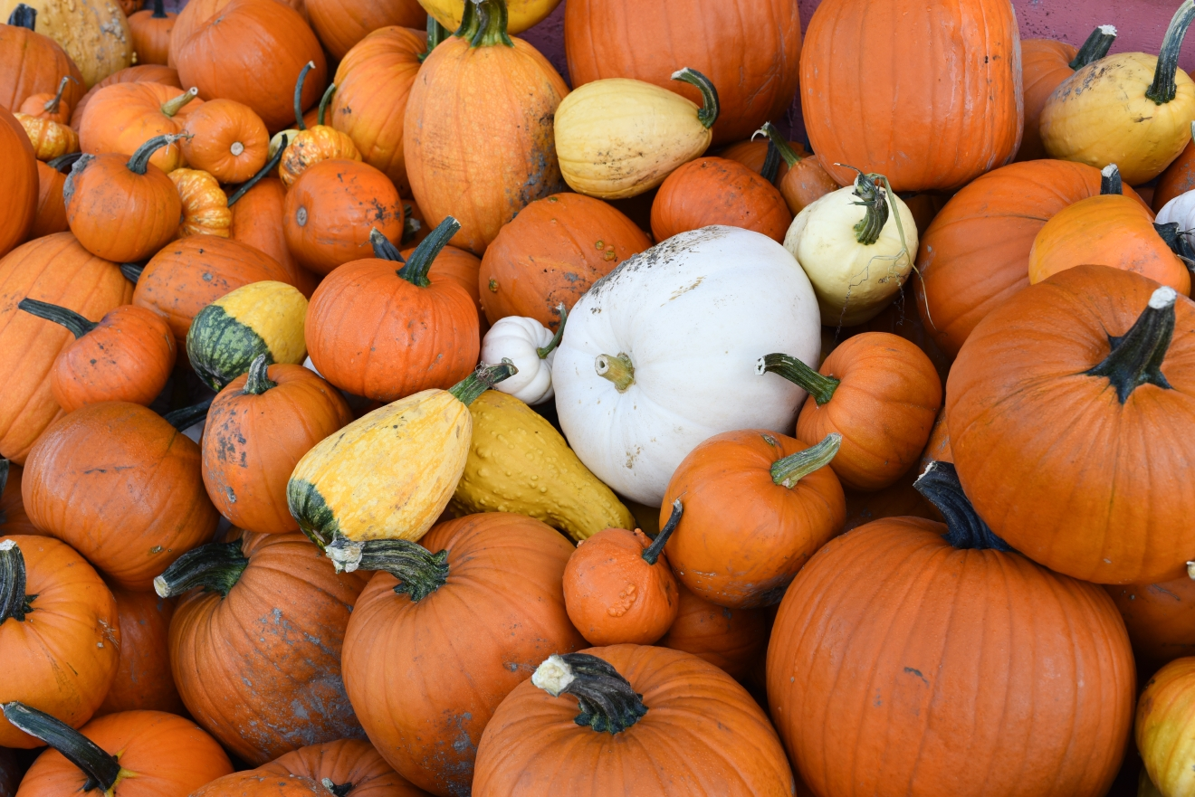 Fall is all about pumpkins and nothing is more fun than a visit to the Pumpkin Patch. Round up the kids and/or your friends who act like kids, and venture out to the local pumpkin patch for hay rides, corn mazes and of course, pumpkin picking. (Image: Rebecca Mongrain/Seattle Refined)
