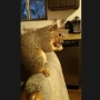 Meridian police: Joey the indoor pet squirrel stops teen burglar