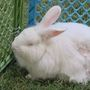 Animal Rescuers: abandoned bunnies too common in Tri-Cities