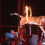 Tangier Shrine Circus is at the Mid-America Center this weekend