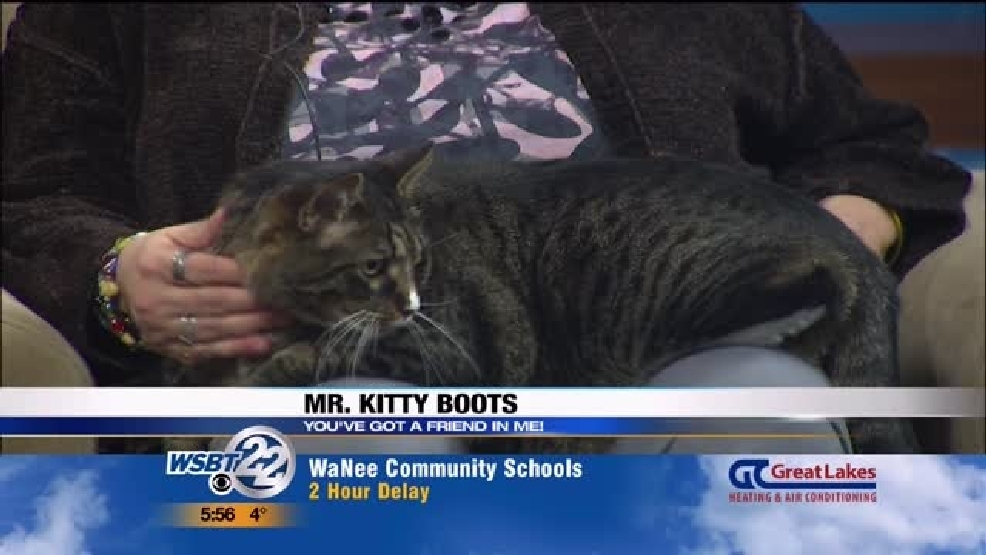 img-Pet-of-the-Week-Mr-Kitty-Boots.jpg