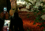 temp New Gorilla Exhibit 1_frame_44760.png